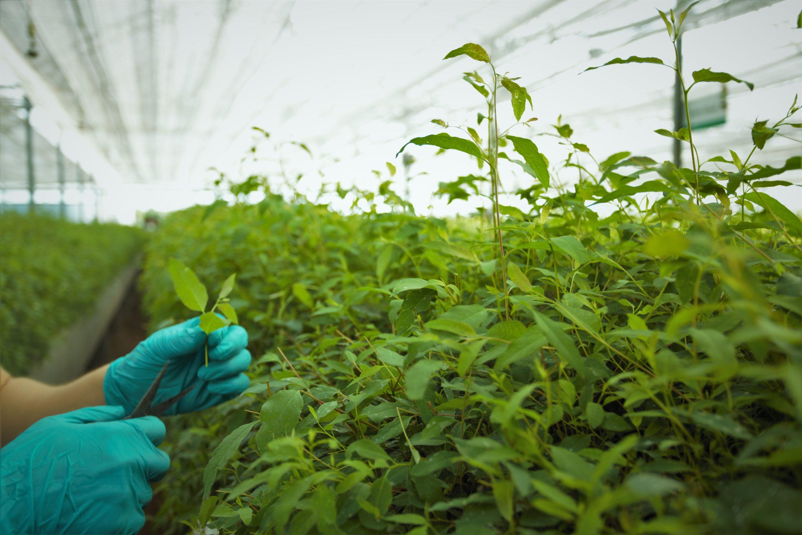 Agro-food MSMEs